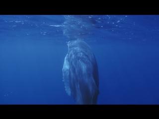 Дикая Бразилия / Побережье дельфинов