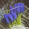 салон цветов Цветочная лавка
