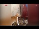 Кот - убийца