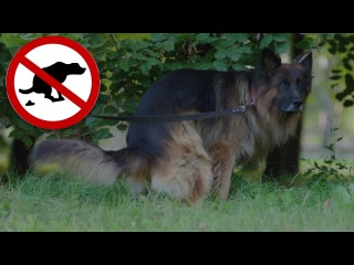 Как отучить собаку гадить дома?