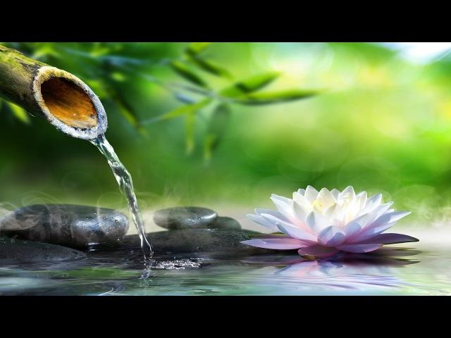 Relaxing Piano Music Sleep Music, Water Sounds, Relaxing Music, Meditation Music ★47🍀