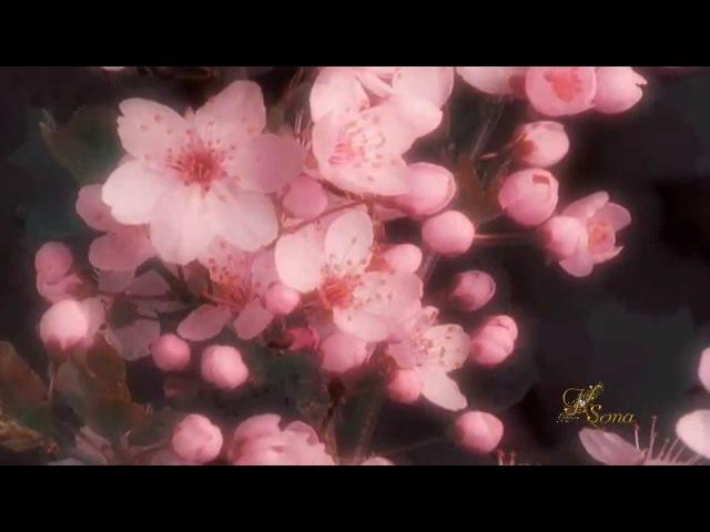 И.Двуреченский - Очарование Цветка