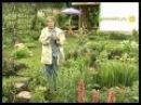 Петунии и однолетники в саду Лекарство от всех хворей