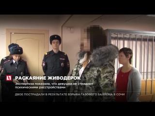 Обвиняемые в убийствах кошек и собак в Хабаровске полностью признали свою вину