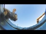 Кто-то оставил камеру в ведре, чтобы увидеть, как животные пьют воду из него, это глупо, но удивительно