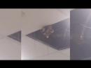 Милый енот притаился под потолком в аэропорту и наблюдал за людьми