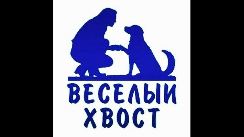 Маремма абруццкая овчарка Вэйси. Первые шаги. Команда Рядом.