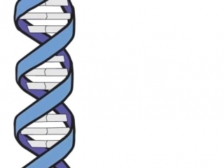 Генетика 101, часть 1_ Что такое гены