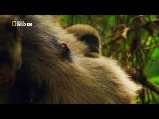 Дикая Бразилия - 1 ( Жемчужины джунглей ) - видео ролик смотреть на Video.Sibnet.Ru