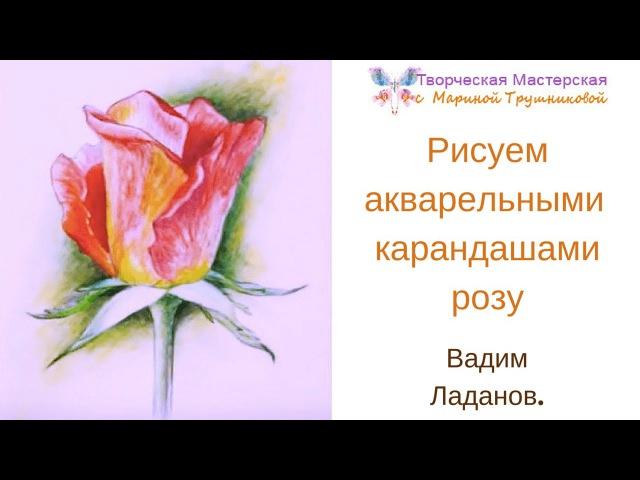 Рисуем акварельными карандашами розу. В.Ладанов