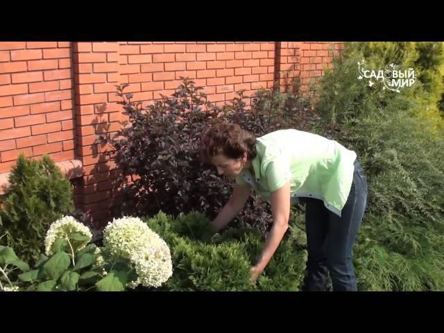 Советы по обрезке кустаников. Сайт Садовый мир