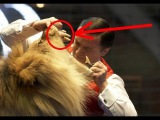 (18+) Топ 5 СМЕРТЕЛЬНЫХ нападений дрессированных львов на человека.