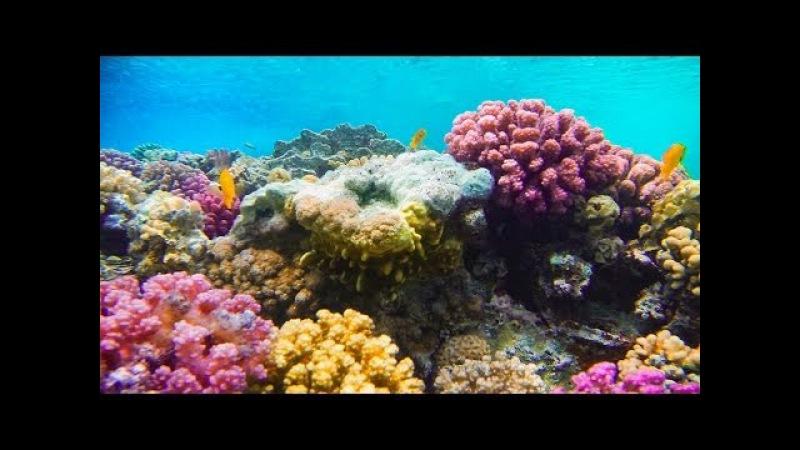 Brixia Club Port Ghalib ✈ Human Safari