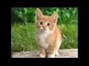 Слайд-шоу про котов,котят и кошек