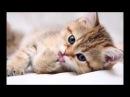 Слайд-шоу про кошек и котят