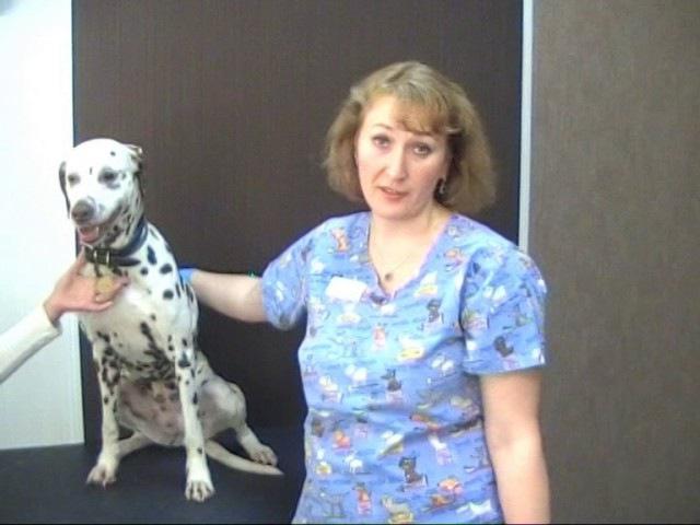Как сделать внутримышечный укол животным