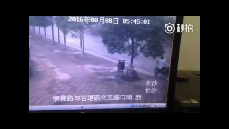 Appalling: Man in central China's Changsha chops down a tree only to steal the bike locked on it