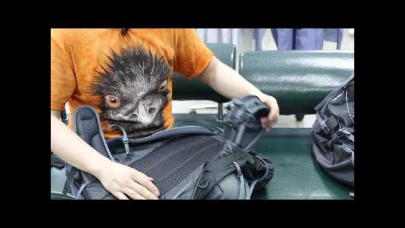 Треккинговый рюкзак Splav «Gradient 35». Обзор