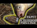 Рыбалка с Ночевкой на Дикой Реке Лещ на Фидер и Закидушки Лучшая Прикормка для Леща