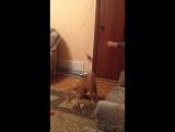 Сумашетший кот