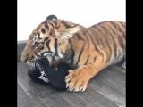 Кошечке понравилась кепка