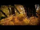Karunesh: Autumn Leaves-Őszi Levelek [HD-BS]