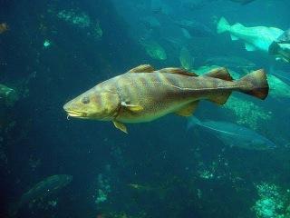 В Норвегию на подводную охоту ч.2