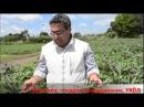 Выращивание овощей Рекомендации Новые бизнес идеи опыт Италии