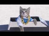ЛУЧШИЕ ПРИКОЛЫ с котами 2016 Самые смешные видео про кошки и коты Подборка прико