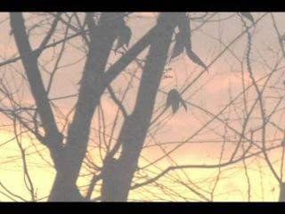 Ryuichi SAKAMOTO - Forbidden Colors (Merry Christmas Mr.Lawrence)