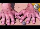 МУРАВЬИ ЖНЕЦЫ КУСАЮТ И ЖАЛЯТ 60 секунд на муравейнике