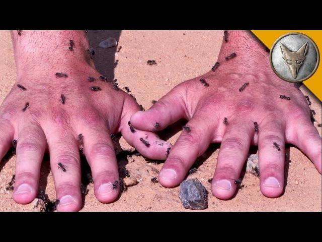 МУРАВЬИ-ЖНЕЦЫ КУСАЮТ И ЖАЛЯТ.60 секунд на муравейнике.