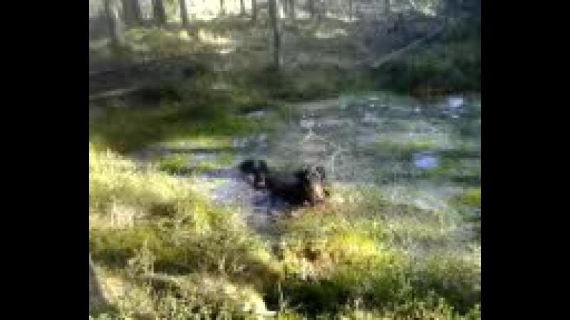 Веда и болото