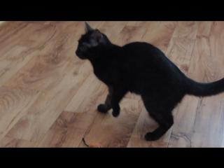 Малина - неуклюжий котенок)