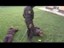 В Тольятти задержаны сектанты, похищавшие людей
