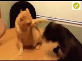Там, где живут кот и пёс скучно не бывает...
