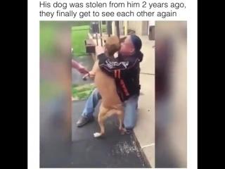 Пес был украден и через 2 года вернулся к хозяину