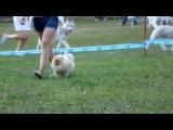 160807 Выставка собак г.Кунгур (7)