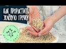 Проращивание Гречка raw vegan рецепт от Вкус Цвет