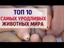 ТОП 10 САМЫХ УРОДЛИВЫХ ЖИВОТНЫХ МИРА