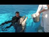 Плавание с дельфинами в Центре