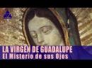 La Virgen de Guadalupe: El Misterio de sus Ojos y La Imagen  |  Red Arcano