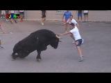 3 Toros de Sants de la Pedra 2013 - La Vilavella (Castellon) Bous al carrer Toros FJGNtv