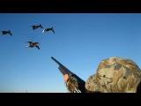 Охота на утку, гуся. Секреты точных выстрелов или как правильно стрелять