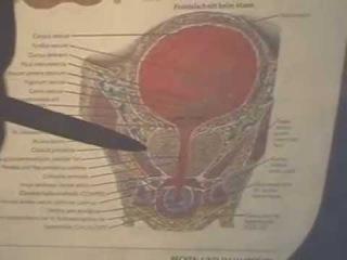 Массаж, кинезиология Матка и предстательная железа, малый таз,грудная полость
