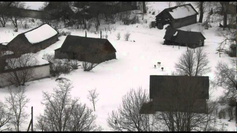 Наблюдение за дикими волками в деревне с вышки [Чернобыльская зона]