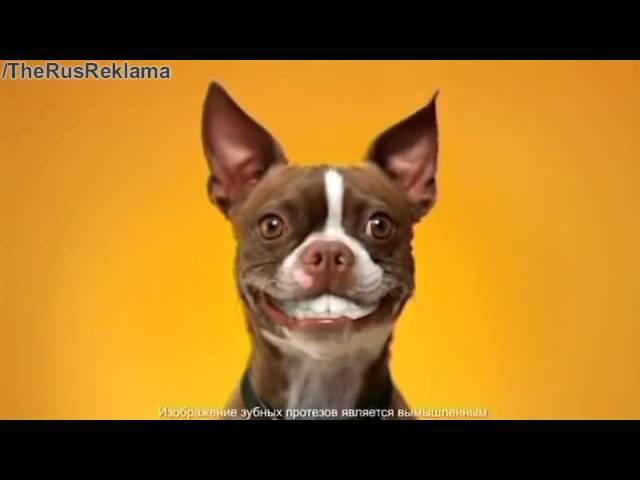 Реклама Педигри Дента Стикс -