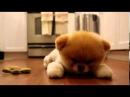 Милый щенок очень похож на плюшевого медвежонка