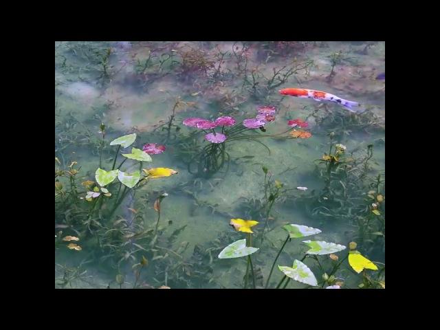 Monet's Pond, Japan - Fabulous Places of Our Planet / Пруд Моне, Япония - Сказочные места планеты