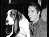 Elvis Presley-Hound dog lyrics